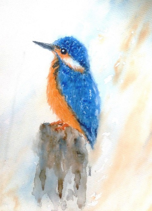 Kingfisher (ref: Gary Jones on PMP)